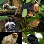 Go to this species on the OneZoom tree of life